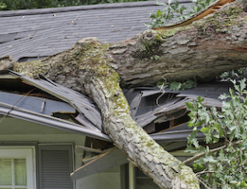 A Quick Guide to Fallen Trees and Insurance Claims